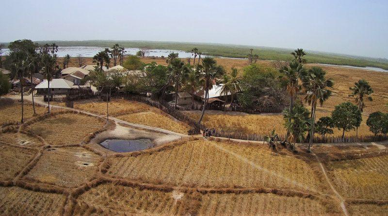 Les rizières du quartier de Essagholou à Niomoune